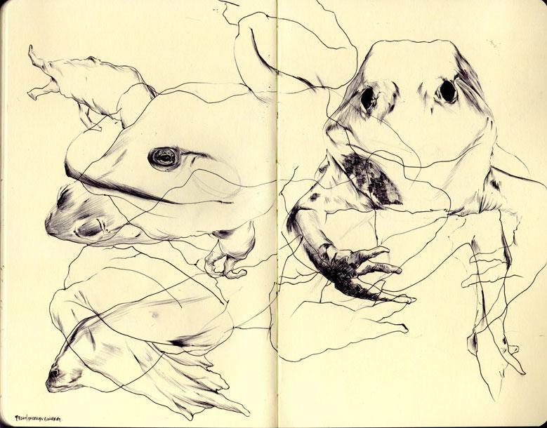 american bullfrog by d...