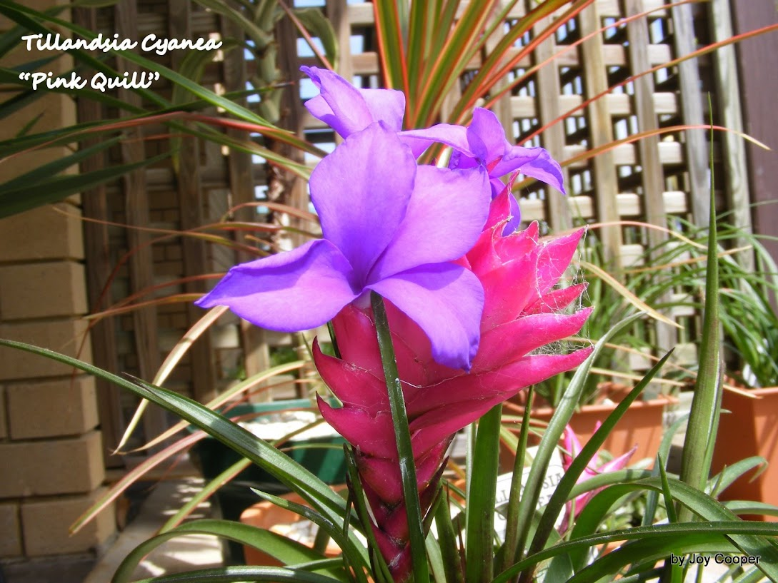 LOVELY FLOWERS 3453
