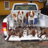 """March 2009 - Dogs w/ the """"birds"""" @ Anderson Creek Hunting Preserve"""