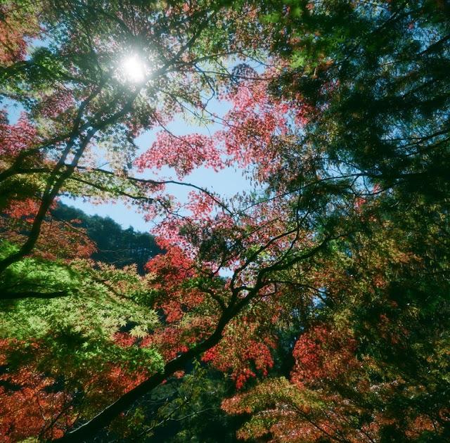 ミノルタオートコード 昇仙峡紅葉