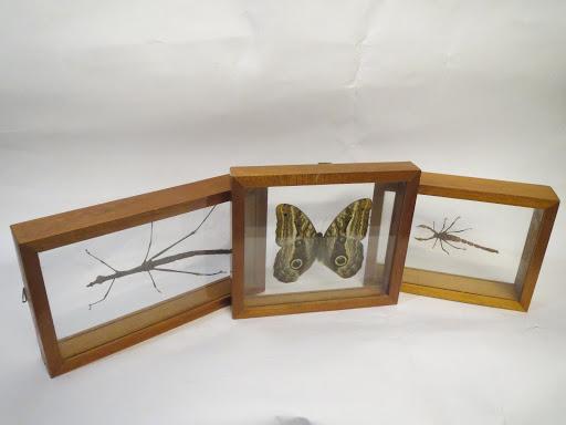 Entomology Specimen Trio