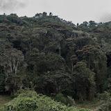 Forêt des nuages. Cerro del Tablazo (3340 m) (Subachoque, Cundinamarca, Colombie), 28 novembre 2015. Photo : C. Basset