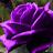 Kara Hill avatar image