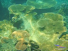 pulau harapan 8-9 nov 2014 diro 09