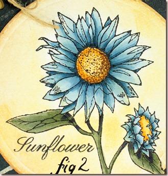fl sunflower b