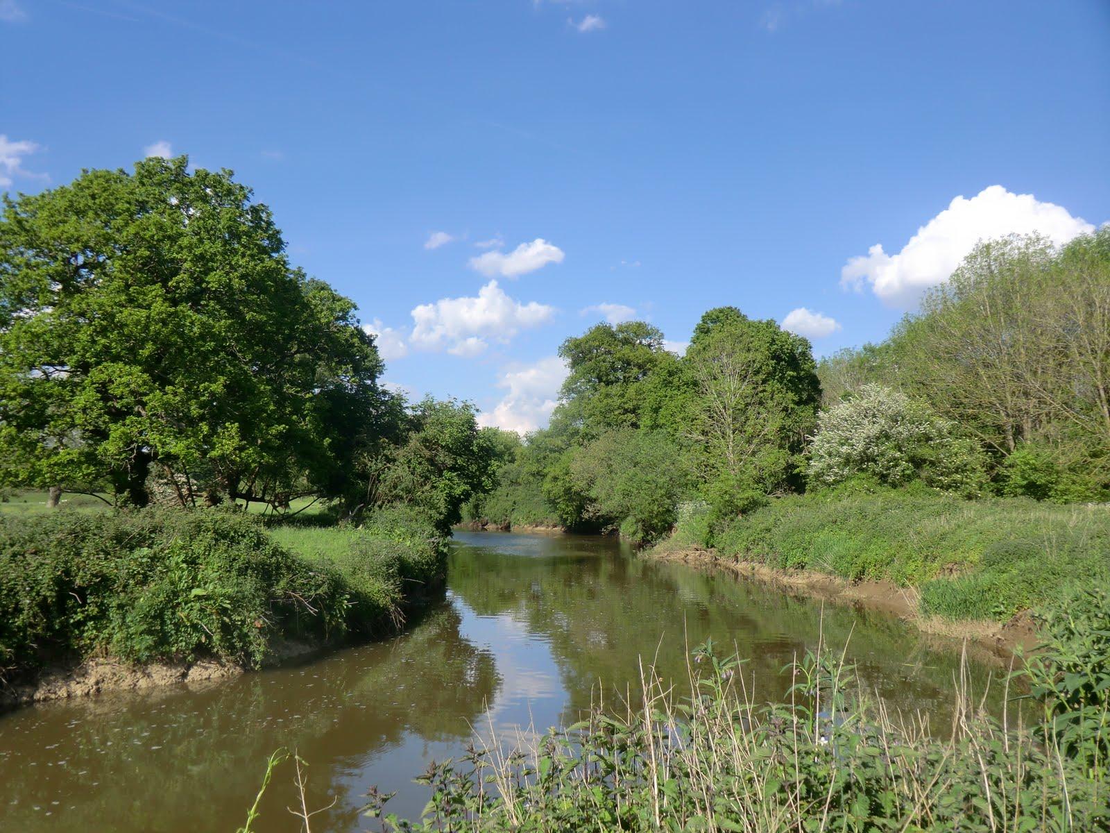 CIMG1116 River Medway near Leigh
