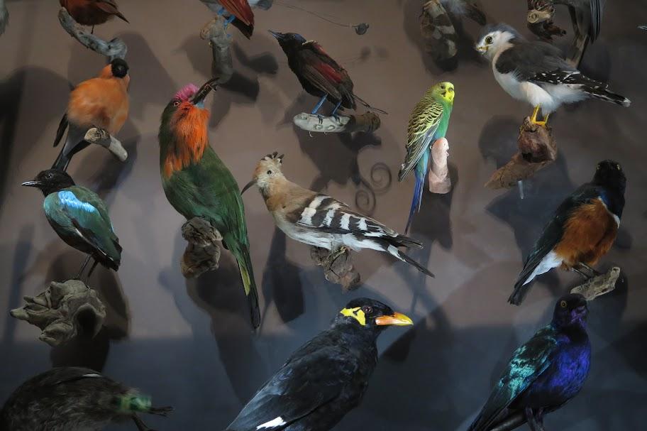 Der Großteil der Vogelsammlung ist für Besucher nicht zugänglich