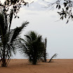 Palms largely burried under 2 meters of sand thrown asure from sea!