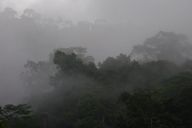 Les Carbets de Coralie (Crique Yaoni) après la pluie, 1er novembre 2012. Photo : J.-M. Gayman