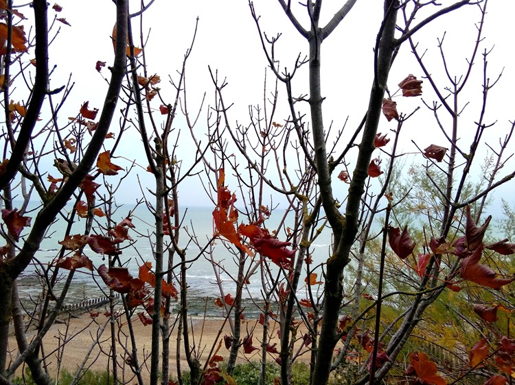autumnal leaves at the beach