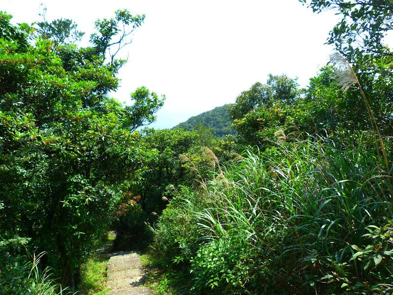 TAIWAN Daxi . Randonnée Taoyan valley - P1260025.JPG