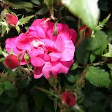 Gardening 2012 - IMG_2758.JPG