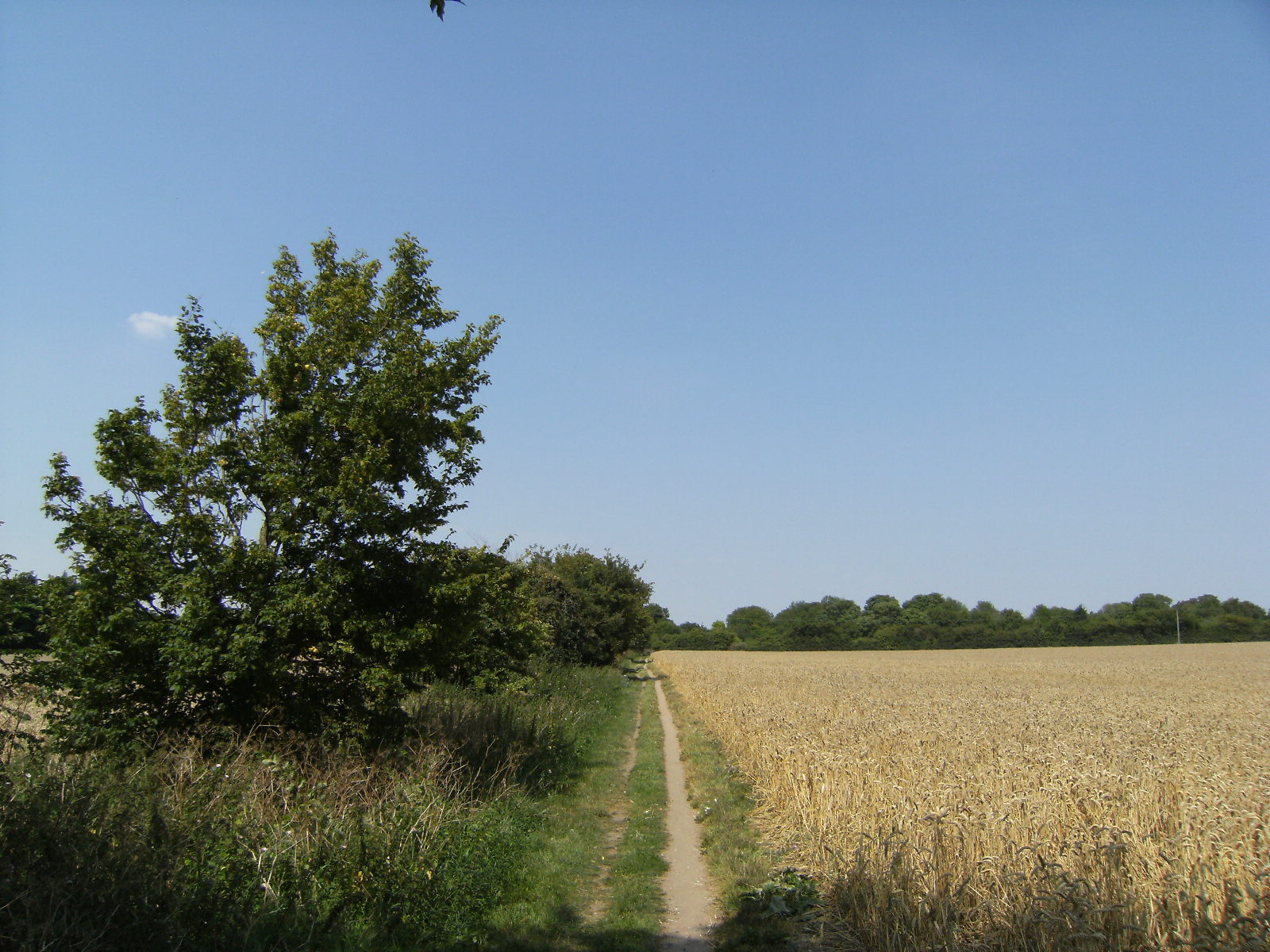 DSCF8971 Essex farmland
