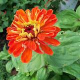 Gardening 2011 - 100_7740.JPG