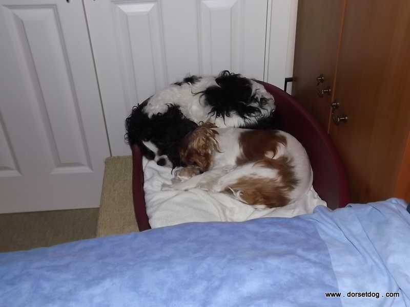 Alfie and Lexie curled up sound asleep in bed together