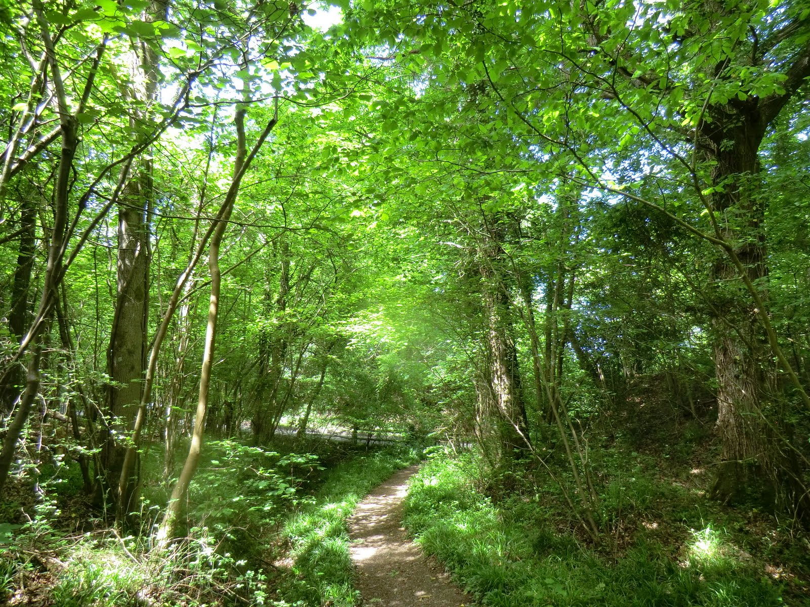 CIMG0320 Woodland path to Copyhold Lane