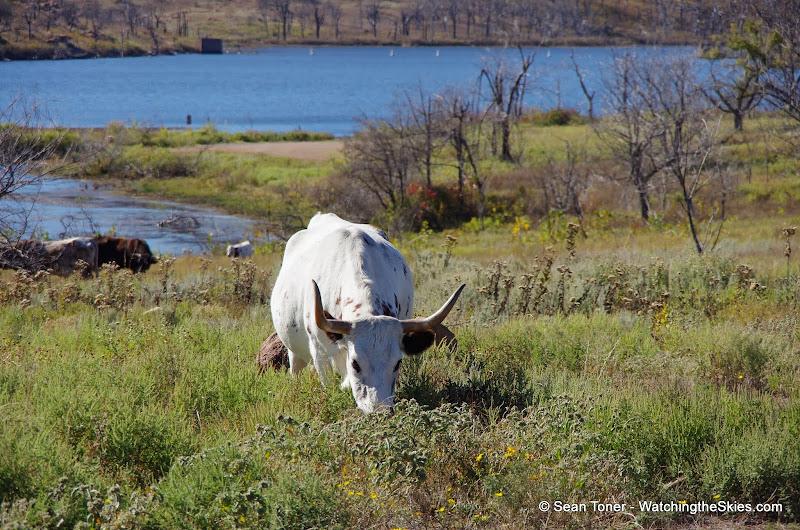 11-09-13 Wichita Mountains Wildlife Refuge - IMGP0409.JPG