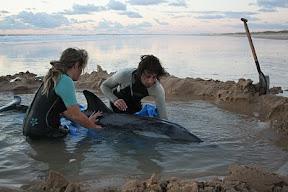 Salvan a Delfines Gracias a Las Redes Sociales