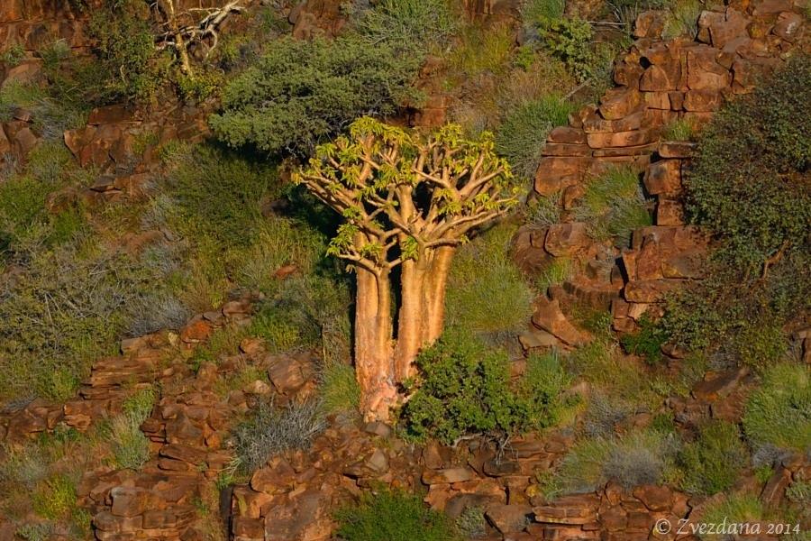 Namibia+2014_078.JPG