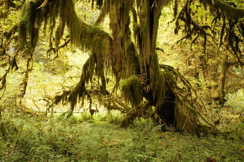 hall-of-mosses-7