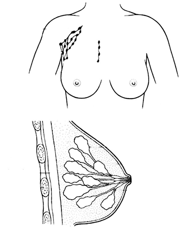 breast coloring pages - photo#8