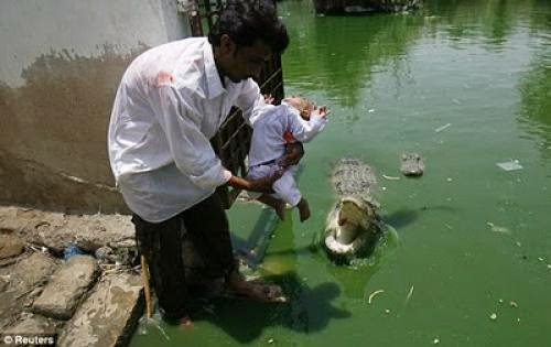 Sheedi Mela Devotees Make Offerings To Crocodiles