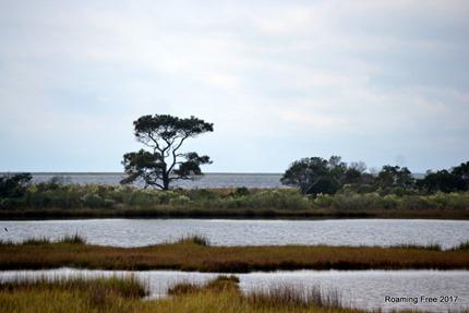 Assateague Bay