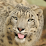 Arctic Leopard's profile photo