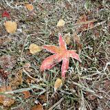SingiDigital 28.12.2011 - 10.jpg