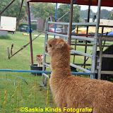 Circus Bossle in Nieuwe Pekela