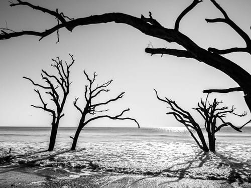Trees on beach Botany Bay Charleston