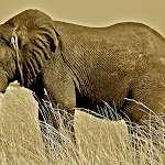 Big 5 Sepia-Elephant.jpg