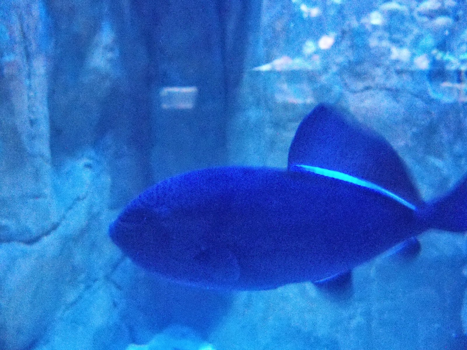 Downtown Aquarium - 116_3862.JPG