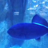 Downtown Aquarium - 116_3862.JPG