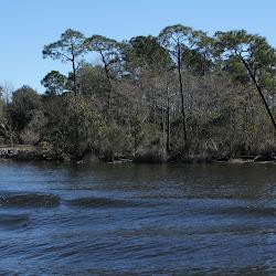 Fowl Marsh from Boat Feb3 2013 205