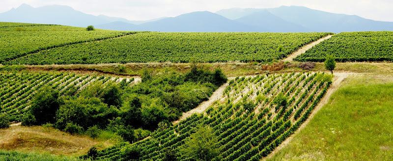 Mazedonischer Wein