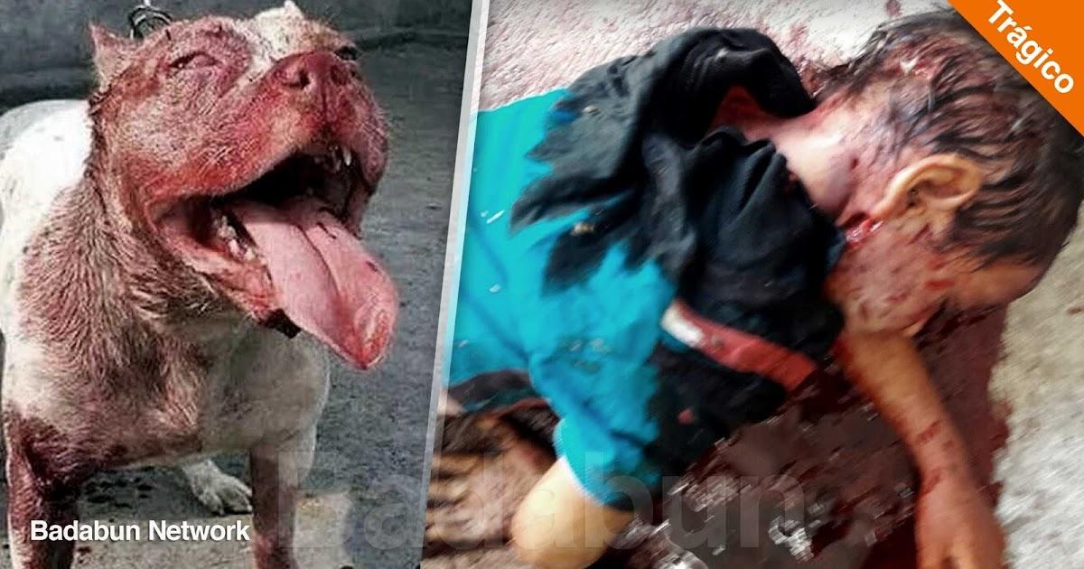 pitbull ataque Guadalajara asesina niño