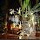 Orchid Garden Eco-Village's profile photo