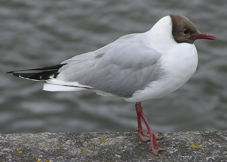 [bayoffundy.ca-SEABIRDS-40-Good-reaso%5B77%5D]