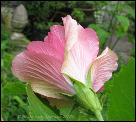 07-06-ink-hibiscus2
