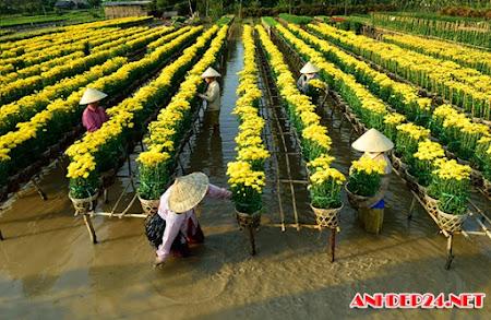 18 hình ảnh chuẩn bị hoa tết đón xuân tại Làng Hoa sa đéc.