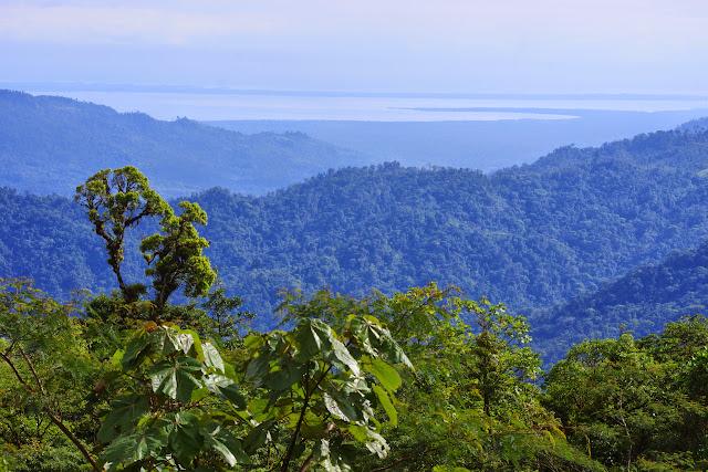 La Laguna de Chiriquí et la mer des Caraïbes, depuis la frontière entre le Chiriquí et le Bocas del Toro, 1000 m (Panamá), 27 octobre 2014. Photo : J.-M. Gayman