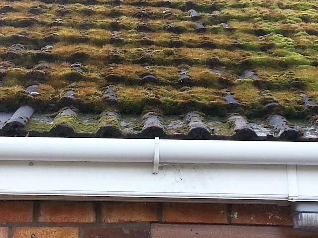 Moss On Flat Roof Woodwork Uk