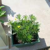 Gardening 2010, Part Two - 101_3466.JPG
