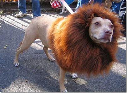 disfraces divertidos para perros  (18)