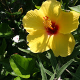 Gardening 2012 - IMG_3823.JPG