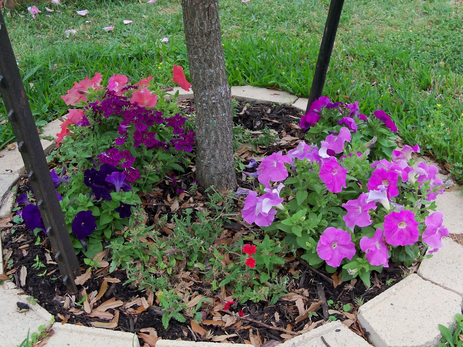 Gardening 2011 - 100_7385.JPG