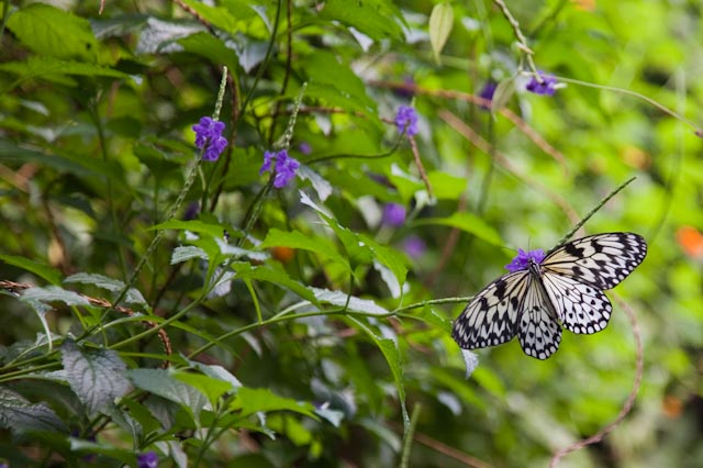 Tropical Butterfly Garden