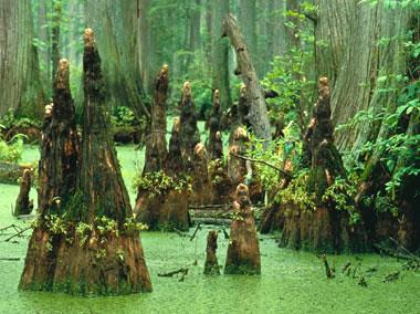Fakta Menarik Hutan yang Seru untuk Diketahui 24 Fakta Menarik Hutan yang Seru untuk Diketahui