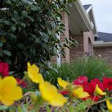 Gardening 2012 - 115_1428.JPG